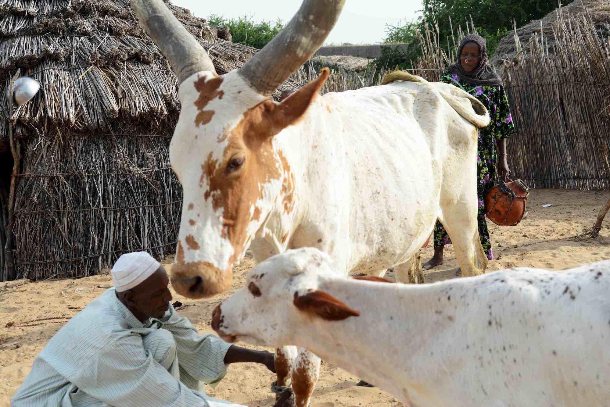 Prevenzione dei conflitti per l'uso della terra in Ciad